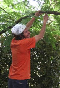 Jacob Fakehih tehtäviin kuului loppuaikoina myös puiden leikkausta.